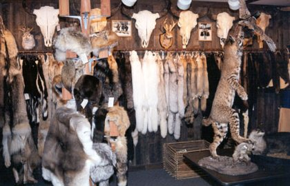 Furs, hides and more!